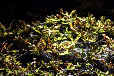 Vert de la Prée II