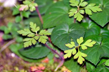 Vert de la Prée I