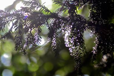 Vert de la Prée IV