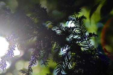 Vert de la Prée VIII