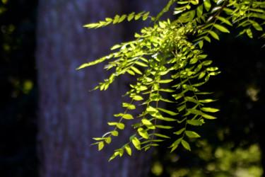 Vert de la Prée V