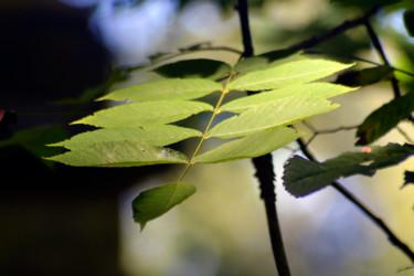 Vert de la Prée VI