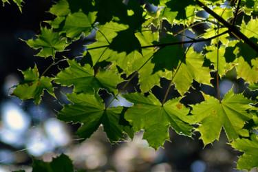 Vert de la Prée VII
