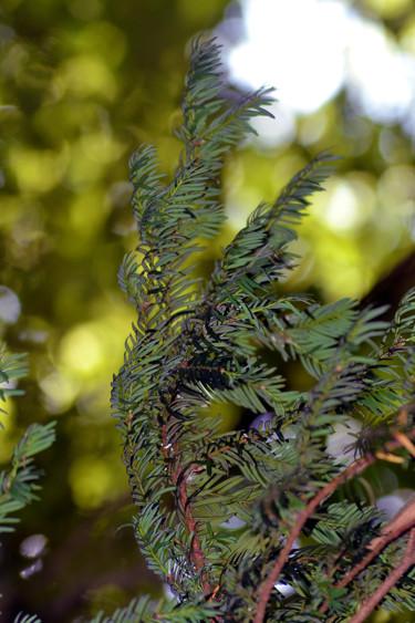 Vert de la Prée X