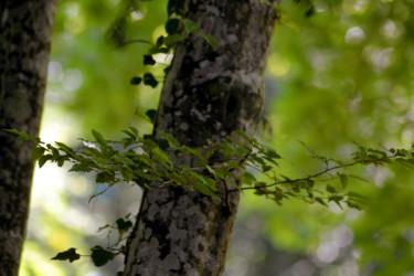 Vert de la Prée XII