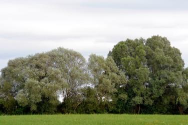 Vert de Montlouis I