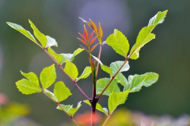 Vert de Montlouis V
