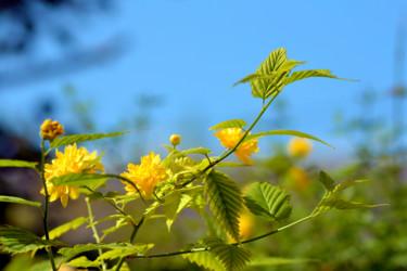 Fleurs de printemps - IX