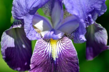 Fleurs de printemps - VI