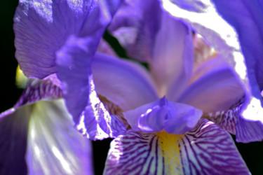 Fleurs de printemps - V