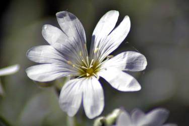 Fleurs de printemps - II