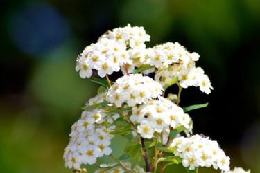 Bouquet de printemps II