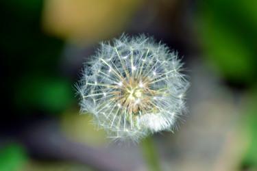 Sphère de printemps