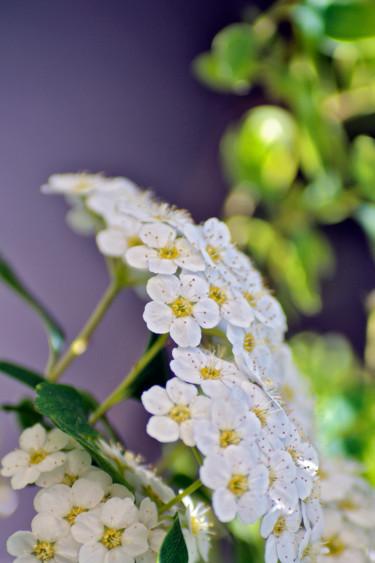 Bouquet de printemps III