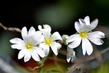 Trio de printemps