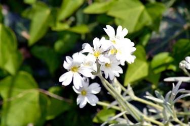 Bouquet de printemps IV