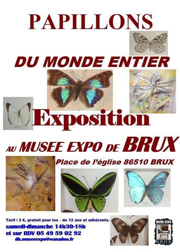 Papillons et libellules à Brux (86)